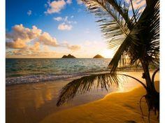 Plage de Hawaï. C'est le plus récent des 50 États des États-Unis et c'est aussi le seul État composé entièrement d'îles, situées au centre de l'océan Pacifique. La simple prononciation du nom Hawaï est un passeport pour un voyage... même immobile