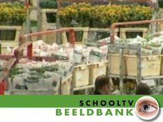 De bloemenveiling - Beeldbank / Netwijs.nl - Maakt je wereldwijs