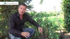 Hoe kan ik een hortensia verplaatsen? - Tuinieren.nl