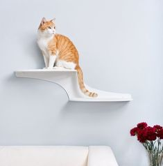 cat shelf - Pet owners often have to find a balance between accessories for their furry companions and stylish decor for the home; that has become much easier ...