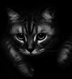 Photo little tiger by Sebastian Benjamin von Ehren on 500px