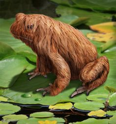 The hairy frog (Trichobatrachus robustus), also called horror frog or Wolverine frog, is found in Cameroon, Democratic Republic of the Congo, Equatorial Guinea, Gabon, Nigeria, and possibly Angola.  I think a haircut is in order.