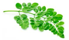 moringa 21 anti histamine foods that fight inflammation and stabilize mast cells.