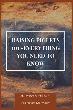 Are you adding piglets to your farm or homestead? Here's everything you know to keep them happy and healthy. Are you adding piglets to your farm or homestead? Here's everything you know to keep them happy and healthy. Herb Garden Design, Diy Herb Garden, Easy Garden, Cute Baby Pigs, Baby Piglets, Container Gardening, Gardening Tips, Vegetable Gardening, Garden Renovation Ideas
