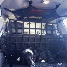 """#RAINGLERNETS pup; Zeph, """"Can we go on the trail already?"""".  #4x4 #DOGBARRIER www.raingler.com"""