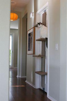 2-13-cat-climber-4.jpg