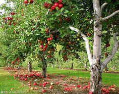 Опасное соседство для садовых культур — 6 соток