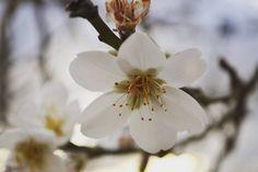 #flor #flordametller #mallorca #mallorcatestim #igersmallorca #estaes_baleares by crrigo