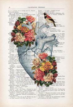 Heart rose Anatomy Botanical Flower vintage drawing book art gothic zen vintage art print wall art p