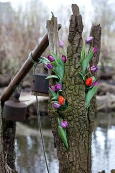 tulips in a tree: Here's the real deal on growing tulips cretively. You're only limited by your imagination. These flower bulb pictures only show 4 ways to use potted Growing Tulips, Spring Flowering Bulbs, Bulb Flowers, Gardening For Beginners, Spring Flowers, Backyard, Yard Ideas, World, Planting