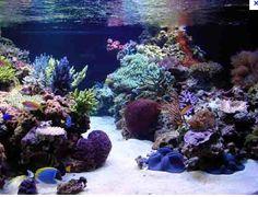 Reef tank                                                                                                                                                                                 More