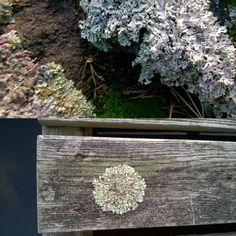 Harmaasävyjen täydellinen harmonia#shadeofgrey#lichen#beautyofnature#color #grey#structure
