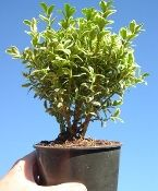 Miniature Garden Plants for Indoors, part shade or shade, and sun or part sun    Tons of supplies