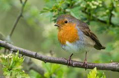 Robin...cute!!