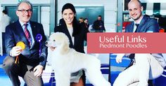 Piedmont Poodles are world renowned for our show dogs. Our Poodles & Dalmatians win Dog Shows world-wide World Class, Dog Show, Poodles, Dalmatians, Dogs, Amp, Standard Poodles, Poodle, Dalmatian