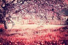 Ανθισμένο δέντρο, Φύση, Ταπετσαρίες Τοίχου