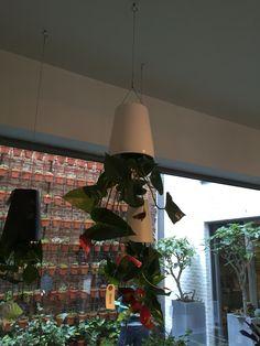 Hanging flower 2