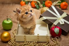 Find the perfect item for every feline on your holiday list.