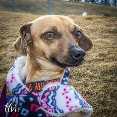 Take Me Home Thursdays: Rescue Animals of the Week | slice.ca