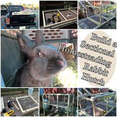 This step by step tutorial of how to build a sectional homesteading rabbit hutch is a way to create quality housing for rabbits. Rabbits need spacious Meat Rabbits, Raising Rabbits, Homestead Survival, Survival Skills, Barnyard Animals, Rabbit Hutches, Mini Farm, Shed Storage, Small Farm