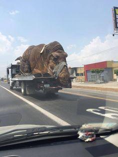 insolite camion dinosaure remorque