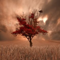 gothic art gallery | Photograph Quiet before the storm by Caras Ionut on 500px
