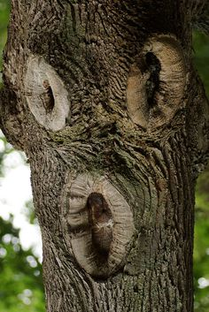 Found Faces - The Surprised Tree Face