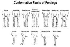 http://horseslovers.com/wp-content/uploads/2013/03/front-leg-problems.jpg