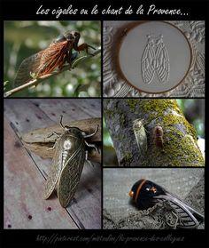 Cigales...  https://www.facebook.com/pages/Mistoulin-et-Mistouline-en-Provence/384825751531072