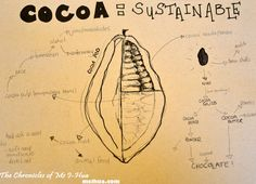 The Green Cacao Pod MFWF Dinner – The Chef, The Chocolatiers & The Cacao Bean