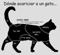 Dónde acariciar a tu gato...
