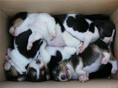Puppy Suprise