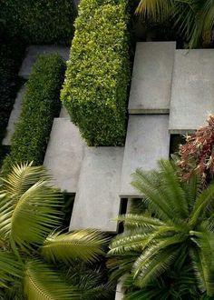 Palms, hedge, steps