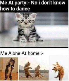 Best Cat Instagram Funny Captions – Best Cat Funny Captions – Funny Cat Captions Picture Funny Cartoon Memes, Very Funny Memes, Latest Funny Jokes, Funny School Memes, Funny Animal Jokes, Cute Funny Quotes, Some Funny Jokes, Funny Relatable Memes, Animal Memes