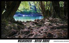 Digital Postcard Photo WILDERNESS RIVER RHINE  Germany
