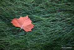 Fallen Leaf 2  DDD    CopyrightⓒNAKIzm
