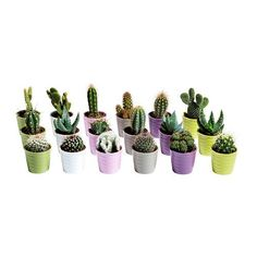 IKEA CACTACEAE Cactus/assorted € pack / Potted plant with pot ;assorted 6 cm Decorate your home with plants combined with a plant pot to suit your style. Ikea Plants, Potted Plants, Cactus Plants, Cacti, Plant Pots, Small Indoor Plants, Indoor Cactus, Mini Cactus, Baby Cactus