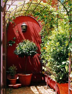 Red wall, terra cotta pots and arched trellis...