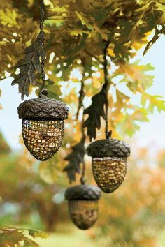 Cute acorn feeders