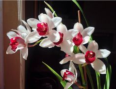 Amantes de Plantas - Mundo das Orquídeas: Adubação correta em Orquídeas