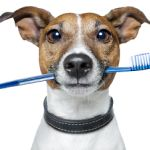 Gordon Vet believes that regular check-up of your #pets is very important. Because of this you are aware of things that may go wrong.