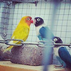 laikipia's photo Rockin Robin, Parrot, Instagram, Parrot Bird, Parrots