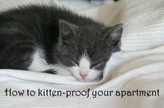 Ready to bring a kitten home? Here's how to prepare your apartment first: http://www.apartmentguide.com/blog/get-your-apartment-ready-to-bring-home-a-kitten/