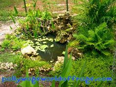 A small 200 gallon Frog Pond I put out to attract frogs and toads in my garden.