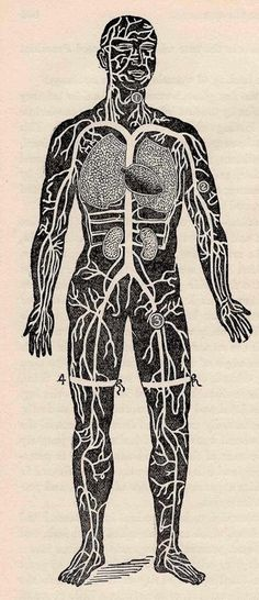 1901 human anatomy unique vintage anatomy print of surgical illness – free medical books Anatomy Art, Human Anatomy, Heart Anatomy, Vanitas, Medical Illustration, Illustration Art, Body Diagram, Der Arm, Anatomy And Physiology