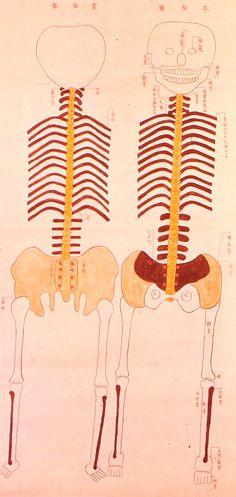 Edo-period medical illustration