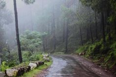 Definitely Kasauli - A place that would lead to the path of peace…!!