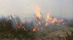 Heidebrand op de Hoge Veluwe