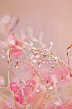 Pink | Pastel | Rosé | Salmon | Peach | Pinku | Rozovyy | Rosa | ピンク | розовый | Rosado | Color | Texture | Style | rain drops.       2.10  via Karen Dettman