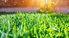 With so many options and opinions available, going green at home can be overwhelming. We asked some green home pros what they wish all homeowners knew.